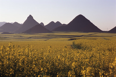 teaser image for Luoping Rapeseed Flower slides