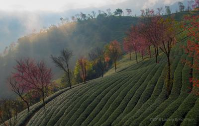 Picture: Nanjian Cherry Flower Valley